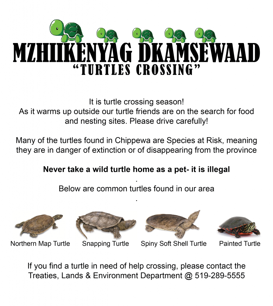 turtle-crossing-poster